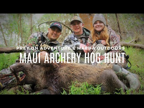 BIG BOAR MEETS HIS END - MAUI ARCHERY HUNT