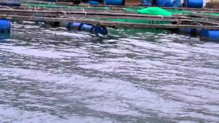 Viet Nam-fish farms on the ocean