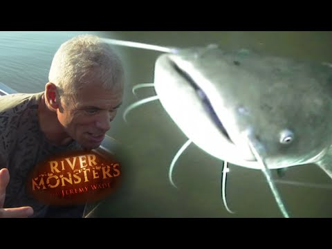 Seeing How A Fish Reacts To Bait | CATFISH | River Monsters