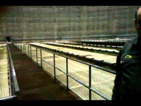 Satsop Nuclear Power Plant.