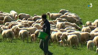 Gros plan sur la filière ovine dans le Lot
