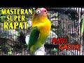Masteran Love Bird Ngekek Panjang Super Rapat No   Mp3 - Mp4 Download