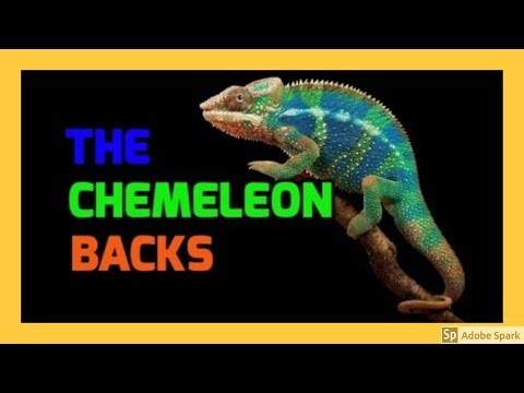 ONLINE MAGIC TRICKS TAMIL I ONLINE TAMIL MAGIC #348 I THE CHAMELEON BACKS