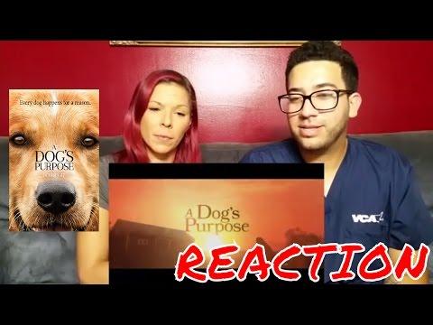 A Dog's Purpose Trailer 1 (2017) - Dennis Quaid Movie   Reaction