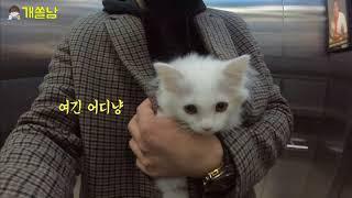 개집사가 새끼고양이를 처음 만난 날|고양이 입양 첫날 …
