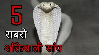 5 Most Powerfull Snakes In The World.[HINDI]