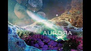 AuroraX  - Spatial  Contemplations