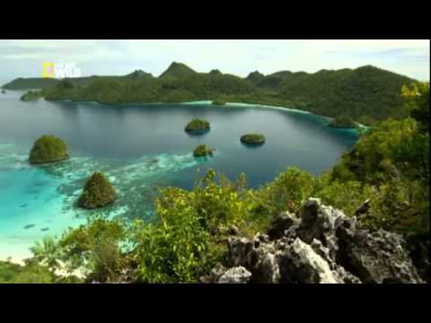 Дикая природа Индонезии  Затерянные миры Папуа - Как поздравить с Днем Рождения
