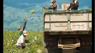 Brgy. Kinilis, Polomolok South Cotabato Philippines