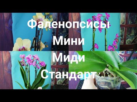 Орхидеи. Уценки.   Отправляю почтой по ВСЕЙ РОССИИ.