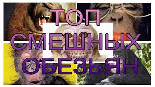 Смешные предки человека - Улетные обезьяны