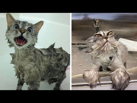 Cats just don't want to bath | Cat's Reaction To Water | Funny cat bathing compilation