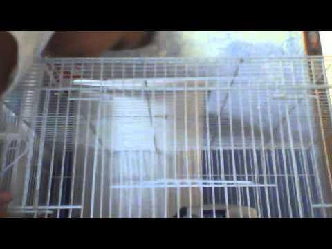 hamsters locos