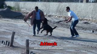 Best Rottweiler Personal Protection Training