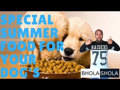 Pet Care - Special Summer Food For Your Dog's - Bhola Shola
