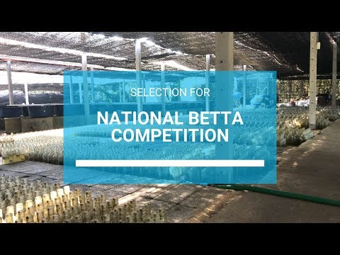 Selection for National Betta Competition 2019 Mp3