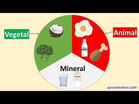 Alimentos de origen animal vegetal y mineral para niños