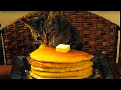 Don T Eat Cat