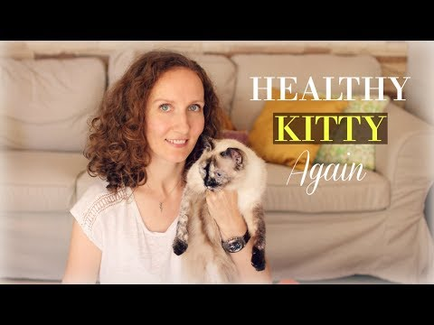 home-remedy-for-cystitis-in-cats-|-treat-uti-in-cats-with-apple-cider-vinegar
