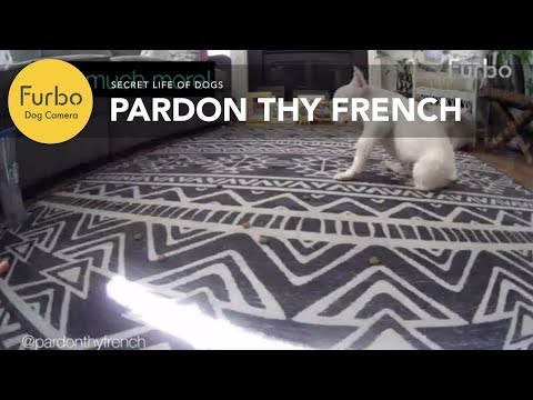 pardon-thy-french-loves-this-dog-treat-camera