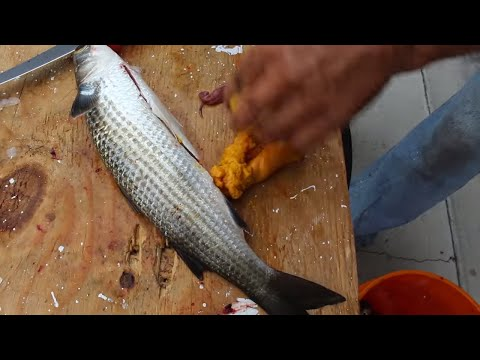 Catch And Cook | Mullet Roe Taste Test
