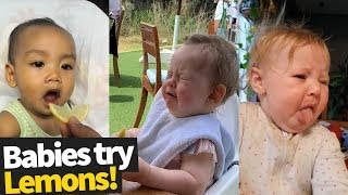 Babies Try Lemons For The First Time Compilation 2019