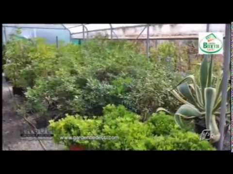 Angoli 05/05/2014: Arredare balconi e terrazzi con le piante - YouTube