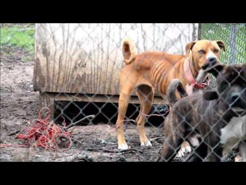 Dogs at 2204 Morningside, Shreveport, Louisiana