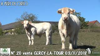 LOT 20 - Vente Cercy-La-Tour - 3 novembre 2018 - Simon Genetic