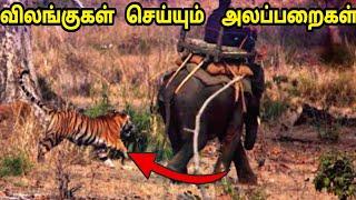 விலங்குகளின் அலப்பறைகள் / Funny Animals Atrocities/ Interesting Things/ Tamil Display