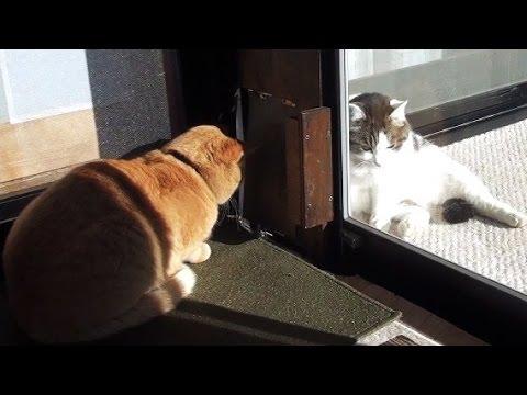 【オモシロ可愛く笑えちゃう~♪ 2匹の猫のワンシーン♪】Two cats cat funny and cute scene