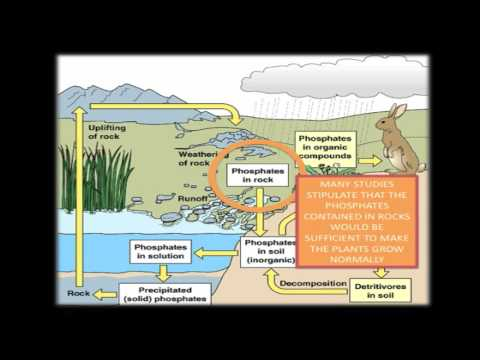 phosphorous and eutrophication Innovating science environmental chemistry: nitrates, phosphates, and eutrophication nitrates, phosphates and eutrophication teaching supplies:environmental science:classroom.