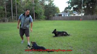 "Dog Training In Tampa Florida ""sig"""