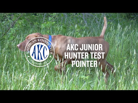 AKC Junior Hunter Test For Pointing Breeds | Intro To Dog Sports