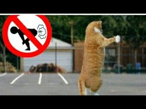 Funny cats and dogs scared from farts funny compilation