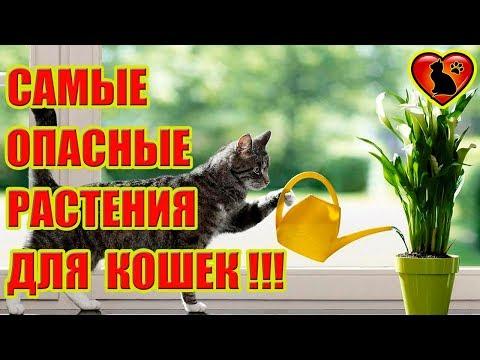 Какие комнатные растения опасны для кошек? Какая трава полезна для кошек?