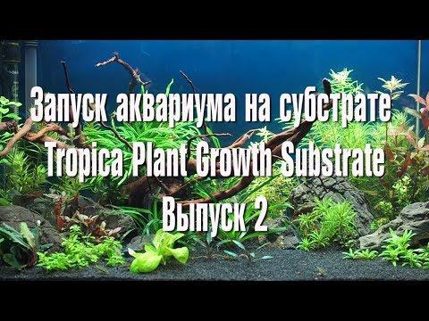 Запуск аквариума на субстрате Tropica Plant Growth Substrate   Выпуск 2