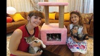Kediciklere Yeni ev oyun kulesi aldık, eğlenceli çocuk videosu