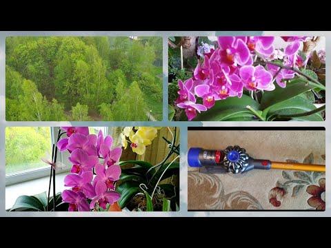 Снег в мае Цветы в квартире Кактусы высохли Орхидеи цветут Пылесос нравится