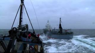 Sea Shepherd Ships Under Attack From Whaling Fleet - 14.02.02