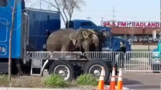 Sioux Falls Shrine Circus 4/23/17