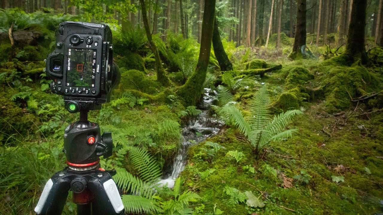 Rainy Woodland Photography in the Lake District