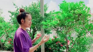 Thăm Vườn Trái Cây Nhà Trồng cùng Lý Hải Minh Hà