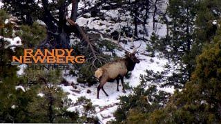 Hunting Arizona Elk with Randy and Matthew Newberg (FT S2 E1)