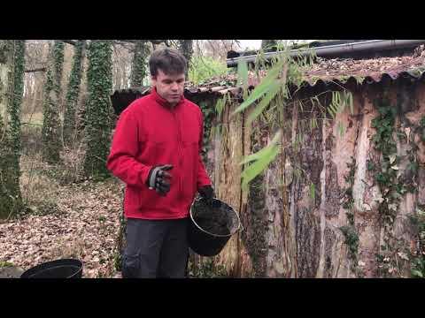 Newfi Bamboo Newfi Newfi Bamboo Bamboo Newfi Newfi Newfi Bamboo Newfi Bamboo Bamboo Newfi Newfi Bamboo Bamboo ikuZOPX