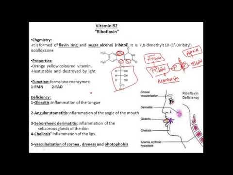biochemistry vitamins B2 (riboflavin) فيتامين بايوكيميستري