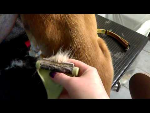 Pro Groomer Tips: Dealing with shedding