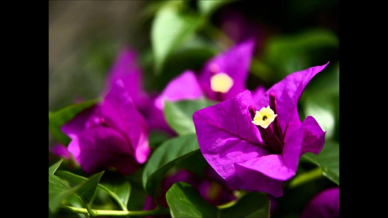 花 を さがす 少女 合唱