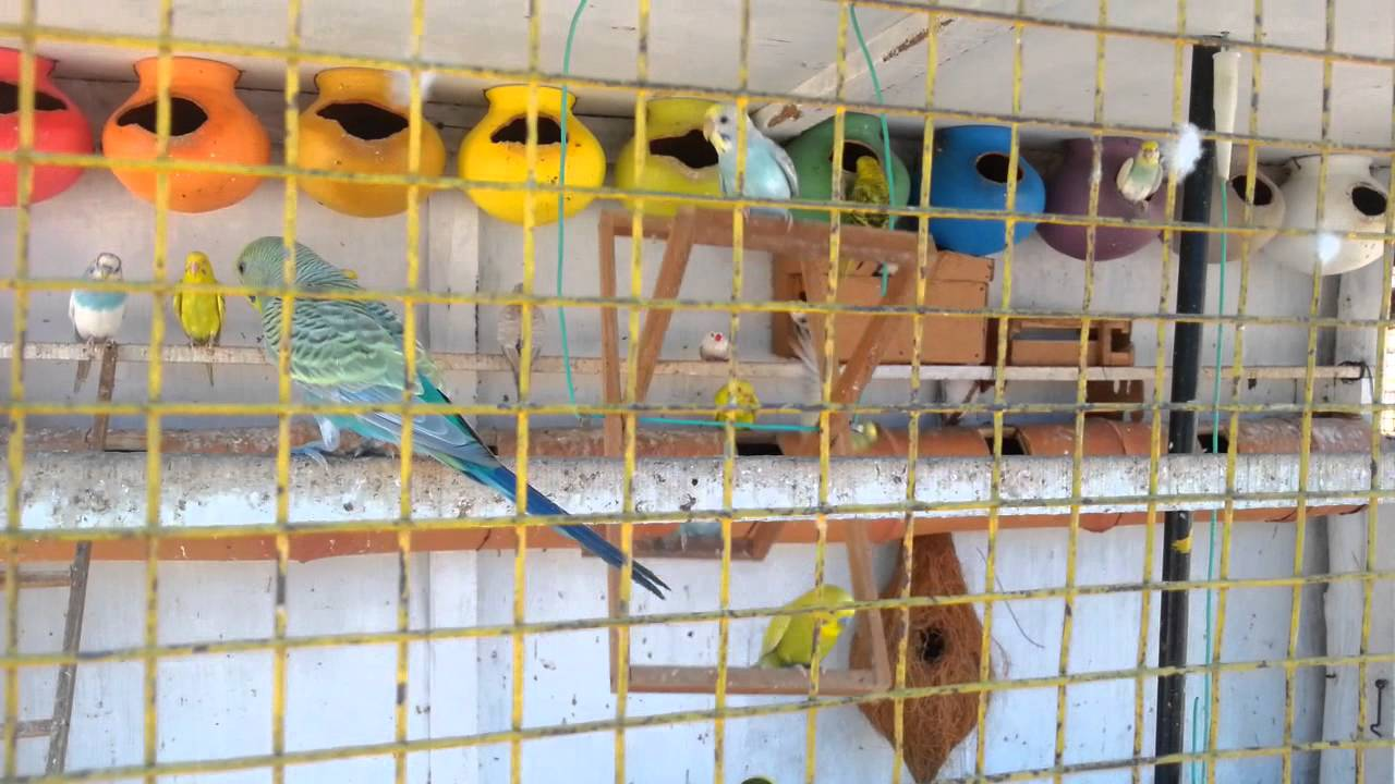 A Colour Full Birds Cage Youtube