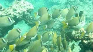 Snorkling and Swimming with fish in Oahu, Hawaii